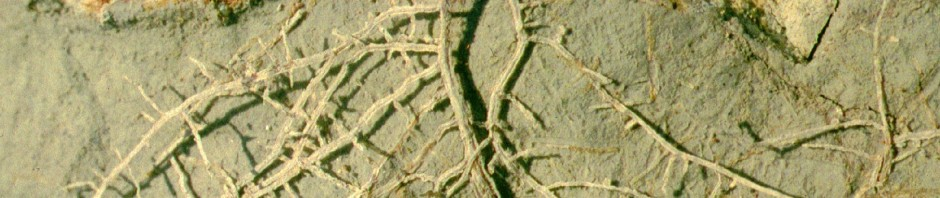 ccrop innov ctr banner 15 interped roots (1)