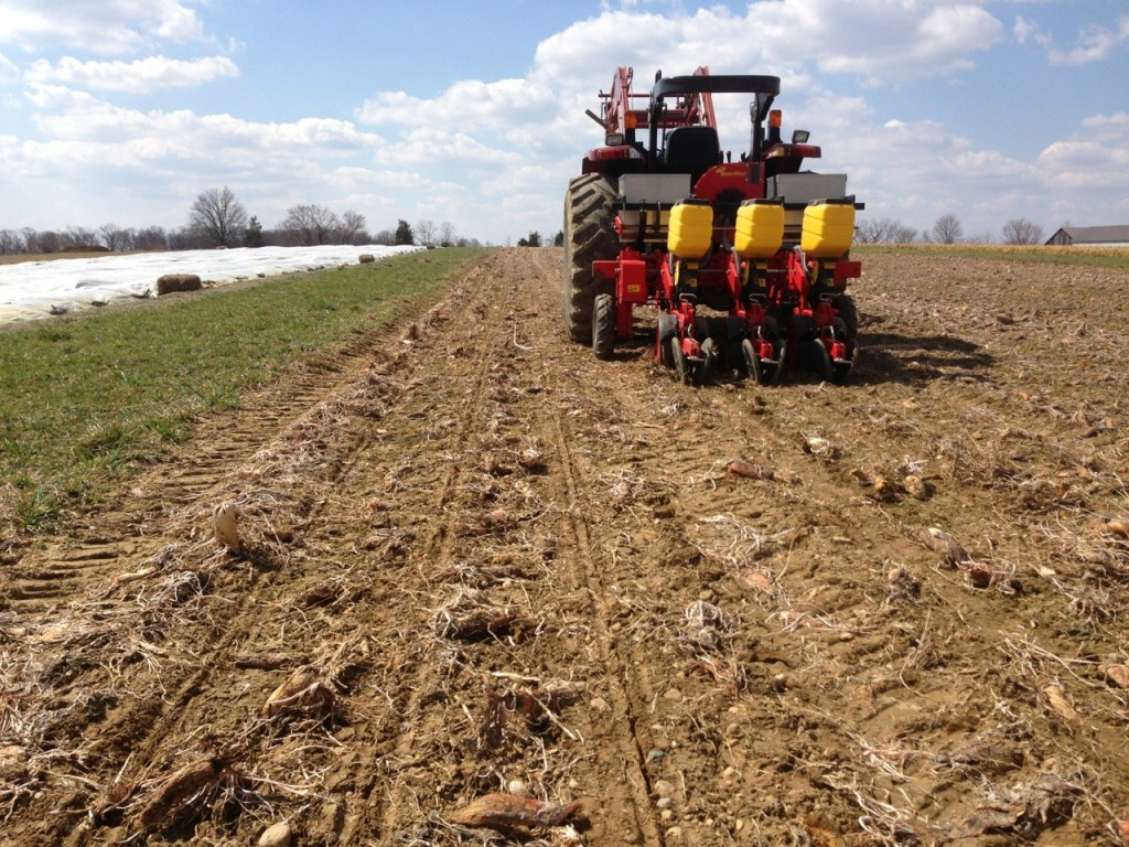 "A MaterMacc seeder has no trouble planting into radish ""residue."" In some soil conditions, press wheels may need to be adjusted for adequate furrow closing. Photo credit: Dave Liker, Gorman Farm"