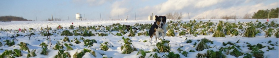 dogs like cover crops too