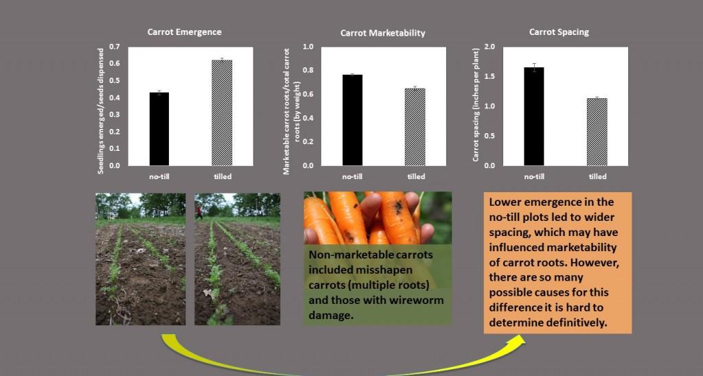 carrot graphs