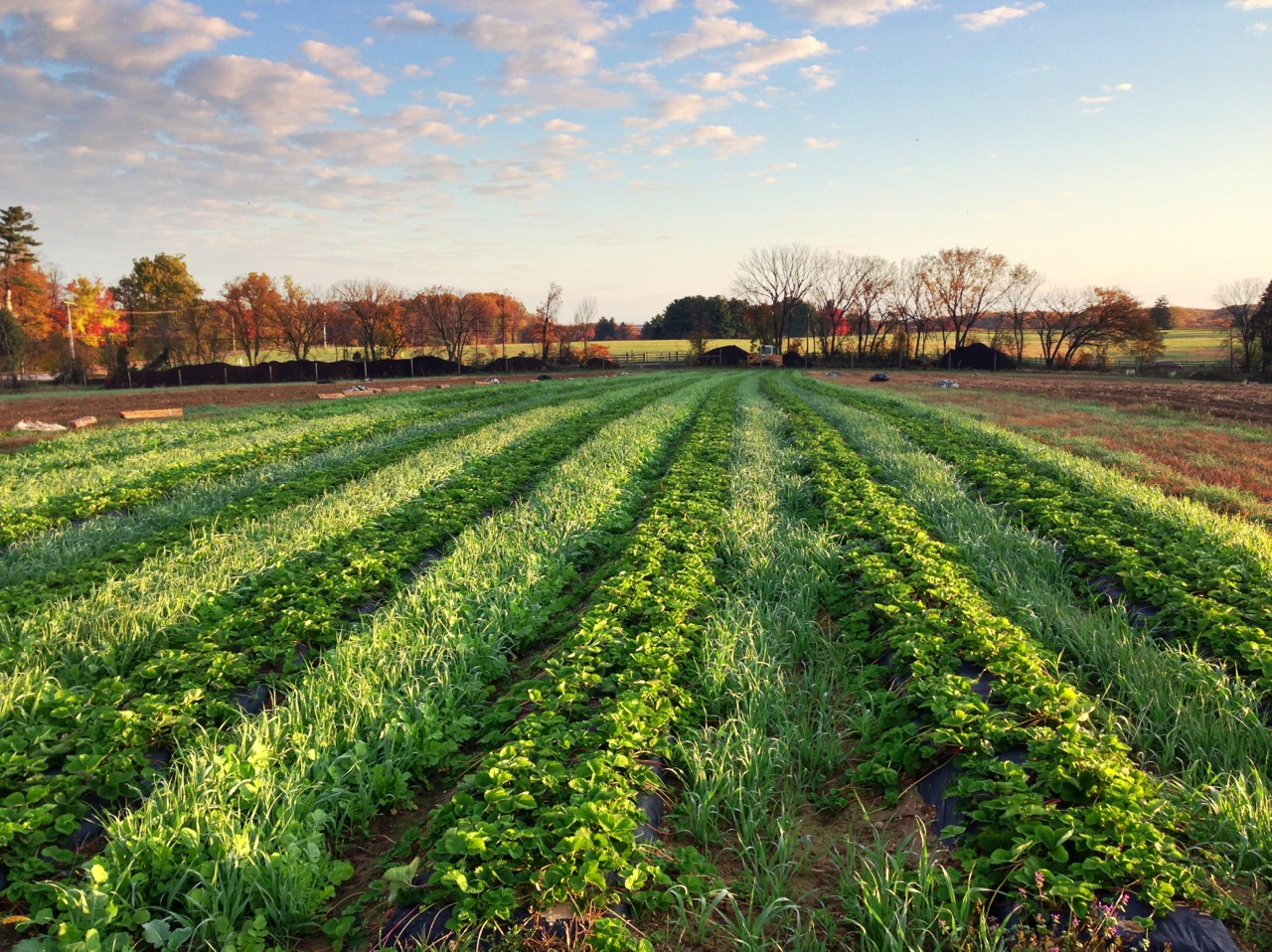 Spatial niches for cover crops like between rows of cash crops can ...