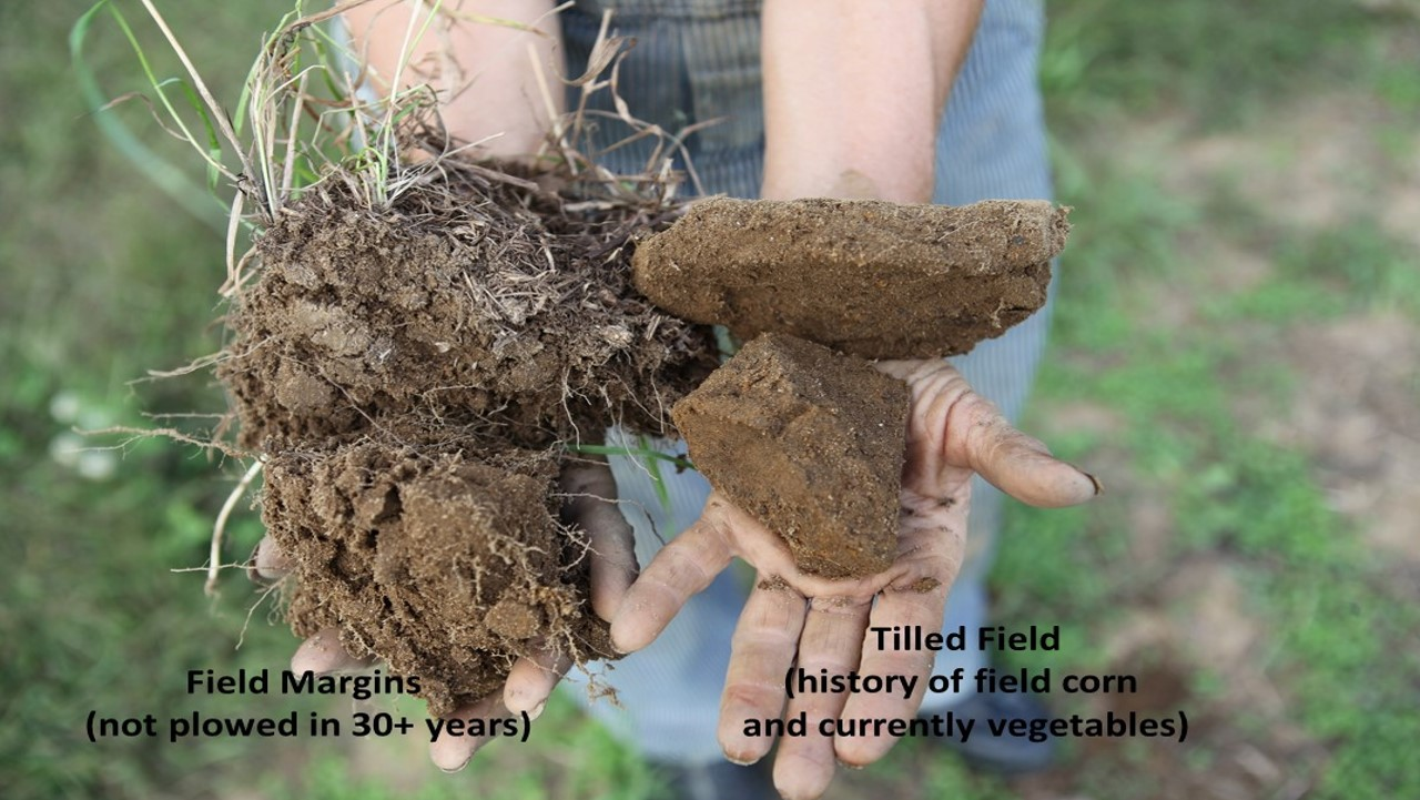Biodrilling how cover crop roots can help your ailing for Soil quality