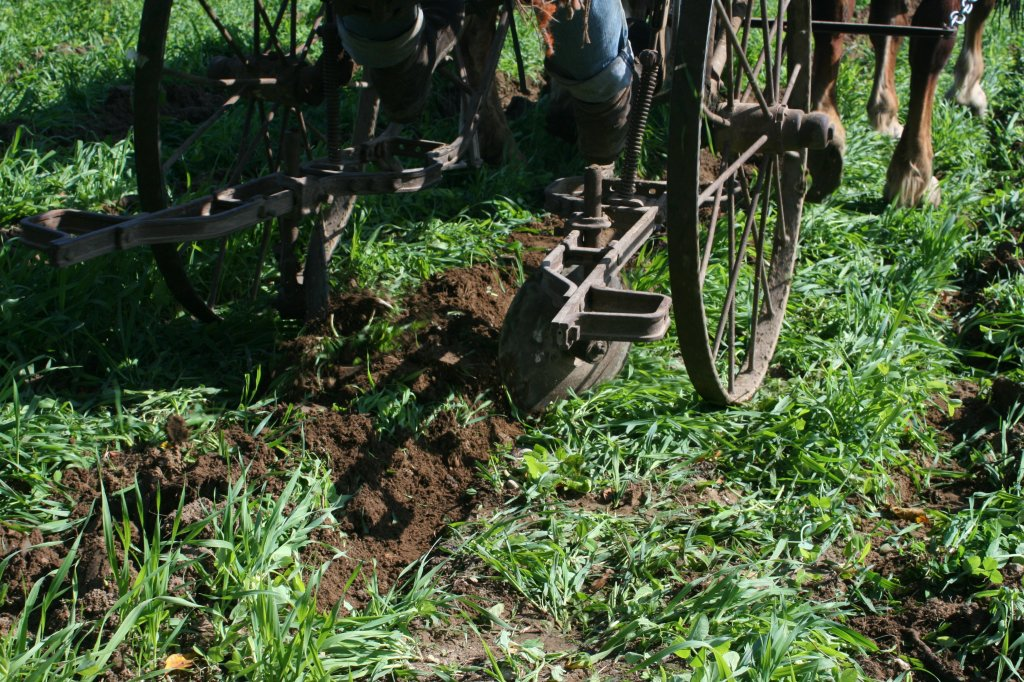 Closing the furrow after garlic planting. Photo credit: Ken Laing, Orchard Hill Farm.