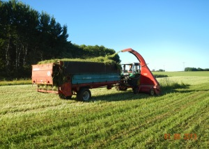 The clover-grass leys are chopped and loaded onto a manure spreader, then spread on the vegetable fields before transplanting. Photo: Jan-Hendrik Cropp.