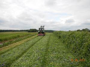 In situ high-biomass cover crop getting rolled/crimped. Photo: Jan-Hendrik Cropp.