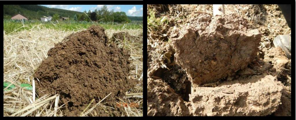 Soil structure can benefit from practices like mulching and cover crops (left), and can be harmed by practices like tillage (right). Photo: Jan-Hendrik Cropp.