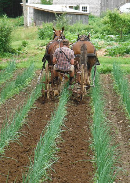 "In June, Joel went through again with 12"" sweeps. the vigor of the onions here is starting to show. Photo: Joel Miller"