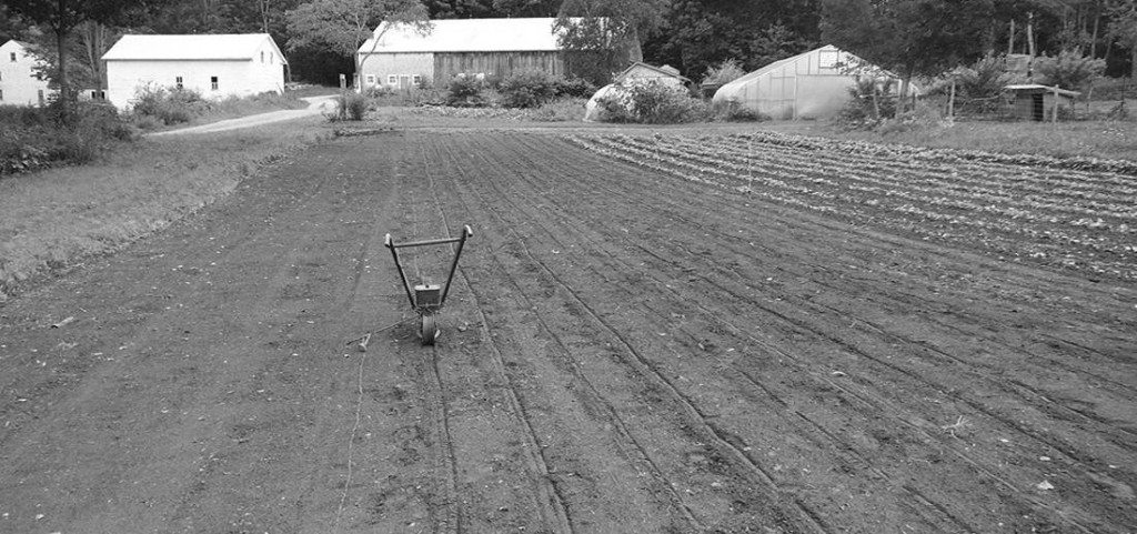 "Radish rows were seeded on August 9 in Lee, NH. The rows were 17"" apart and seeded with the #13 seed hole on a Planet Junior. The field had received compost earlier in the summer. Photo: Joel Miller"
