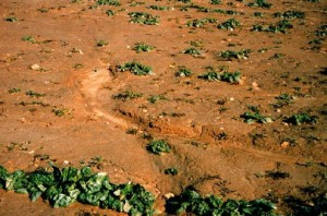 Losing a crop is a bummer. Losing the soil is tragic.