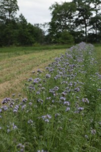 If your goal is to support pollinators, even a strip can do a lot.