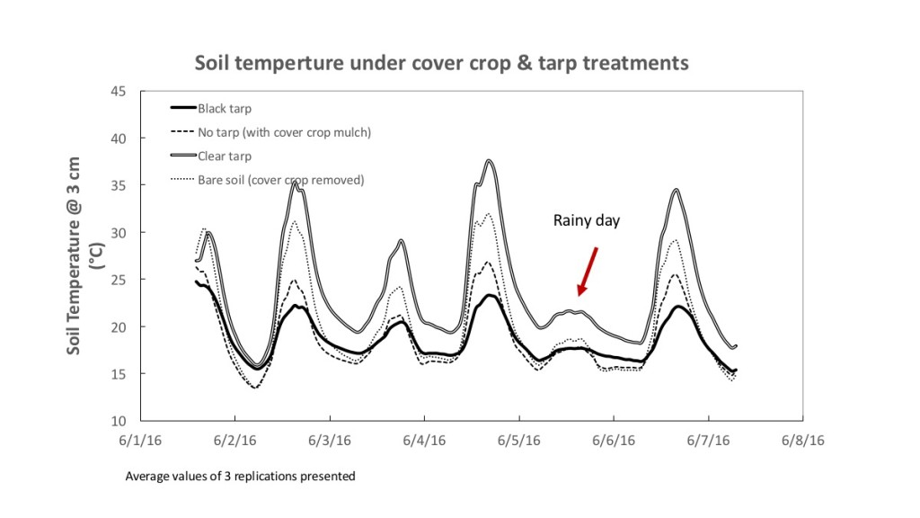 soil temp under different tarp treatments