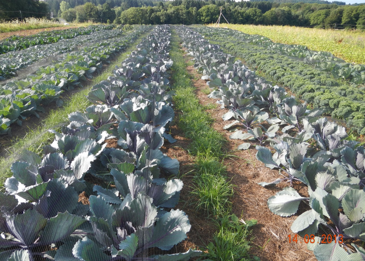 Under Cover: Rotational No-till and Mulching Systems for ...